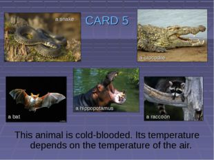 CARD 5 This animal is cold-blooded. Its temperature depends on the temperatur