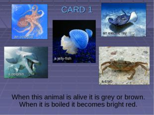CARD 1 When this animal is alive it is grey or brown. When it is boiled it be
