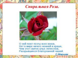 Спиральная Роза. О ней поют поэты всех веков, Нет в мире ничего нежней и краш