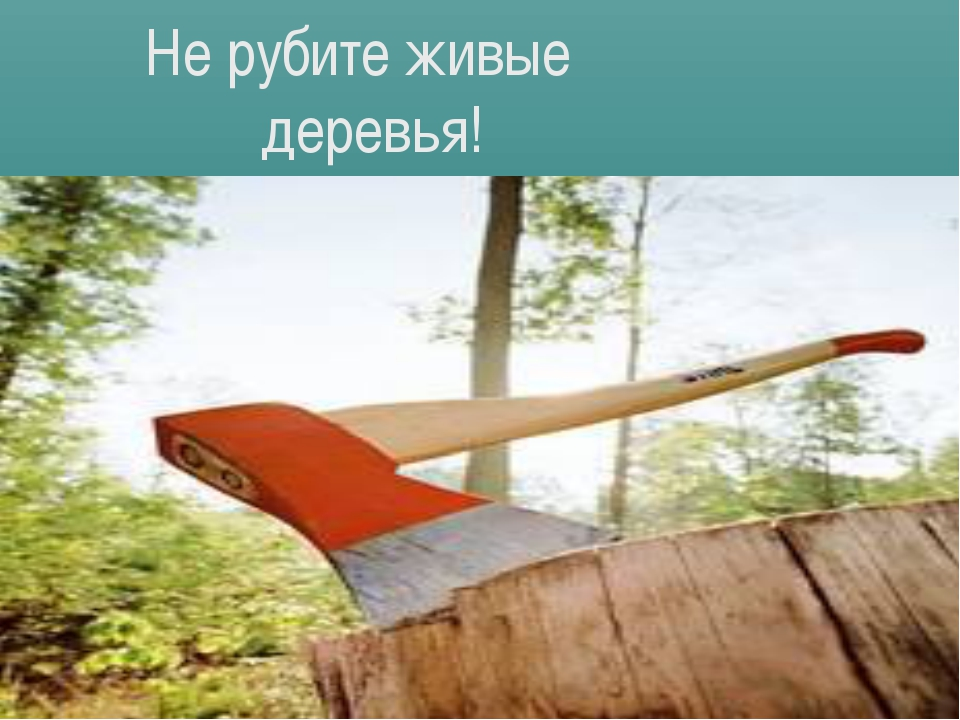 Не рубите живые деревья!