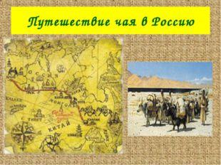 Путешествие чая в Россию