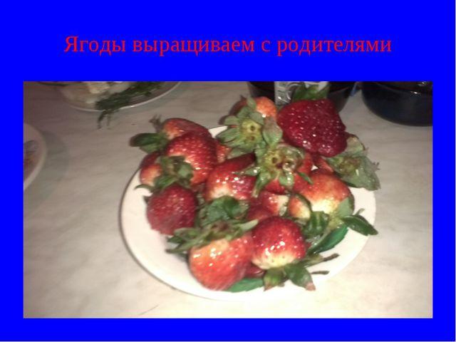 Ягоды выращиваем с родителями