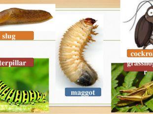 slug caterpillar maggot cockroach grasshopper