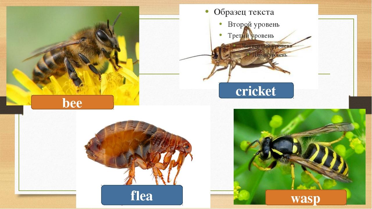 bee flea cricket wasp
