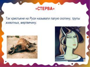 «СТЕРВА» Так крестьяне на Руси называли палую скотину, трупы животных, мертве