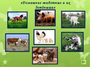 «Домашние животные и их детёныши»