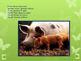 Учит свинка поросенка Кушать много, хрюкать звонко. А еще купаться в луже, Чт