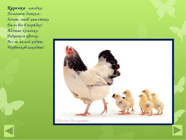 Курочка - наседка Помогает деткам: Хочет, чтоб цыплятки Были все в порядке! Ж...