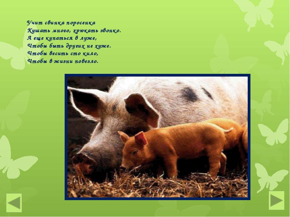 Учит свинка поросенка Кушать много, хрюкать звонко. А еще купаться в луже, Чт...