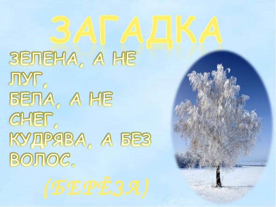 (БЕРЁЗА)