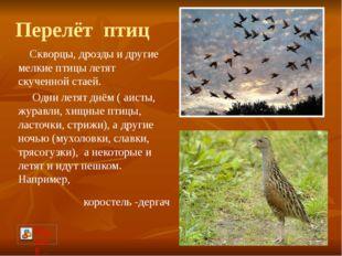Перелёт птиц Скворцы, дрозды и другие мелкие птицы летят скученной стаей. Одн