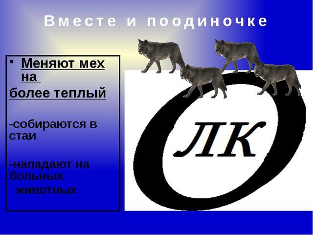 Меняют мех на более теплый -собираются в стаи -нападают на больных животных В...