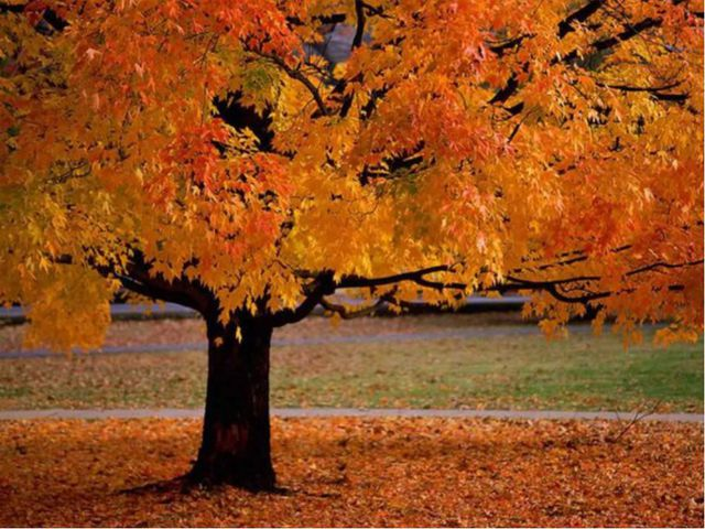 Я иду в школу природа (жизнь, родная Земля, заповедная природа, планета земля...