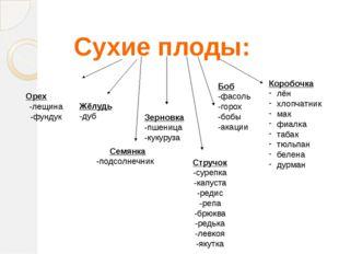 Сухие плоды: Орех -лещина -фундук Жёлудь -дуб Семянка -подсолнечник Зерновка