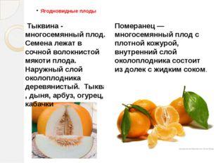 Ягодновидные плоды Тыквина - многосемянный плод. Семена лежат в сочной волокн