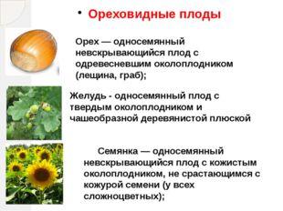 Ореховидные плоды Орех — односемянный невскрывающийся плод с одревесневшим ок