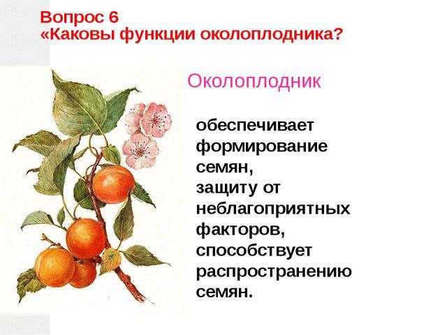 обеспечивает формирование семян, защиту от неблагоприятных факторов, способст...