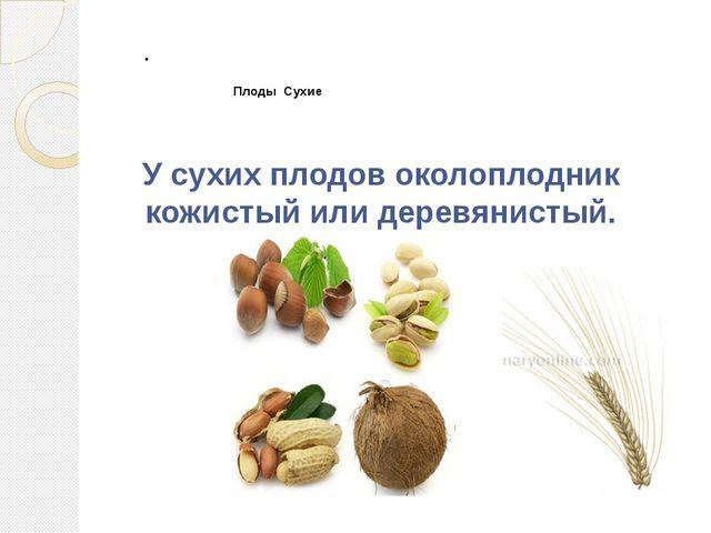 Плоды Сухие  У сухих плодов околоплодник кожистый или деревянистый.