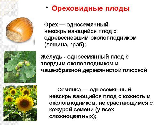 Ореховидные плоды Орех — односемянный невскрывающийся плод с одревесневшим ок...