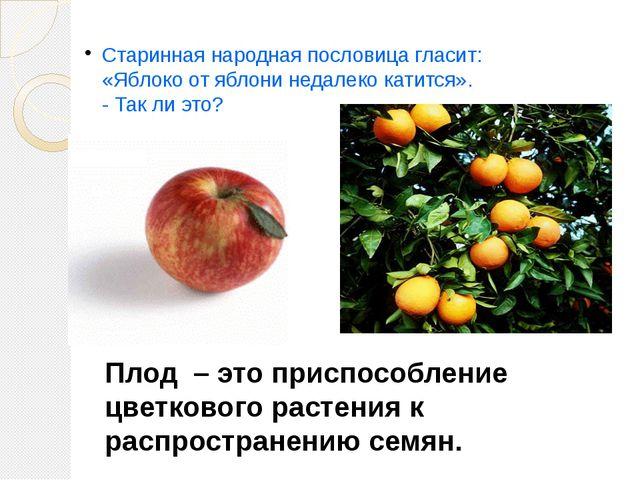 Старинная народная пословица гласит: «Яблоко от яблони недалеко катится». - Т...