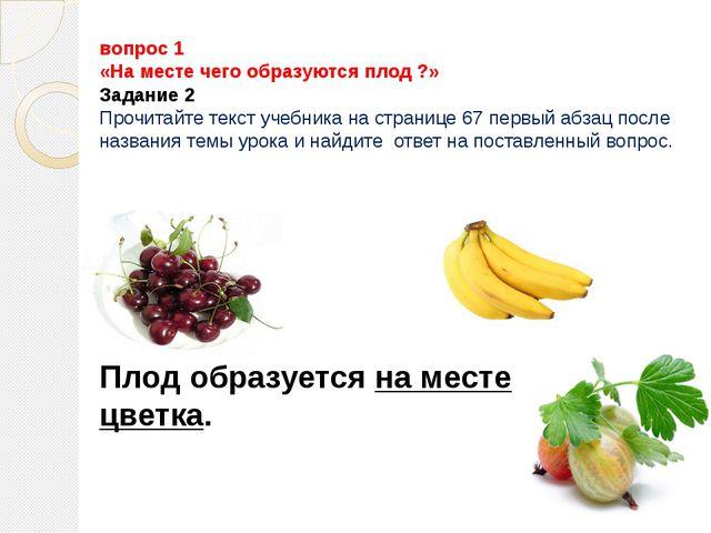 вопрос 1 «На месте чего образуются плод ?» Задание 2 Прочитайте текст учебник...