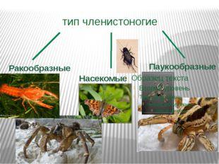 тип членистоногие Ракообразные Насекомые Паукообразные