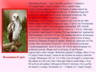 Жыланшы бүркіт (лат.Circaetus gallicus) -қаршыға тұқымдастары. Қанат құлашы