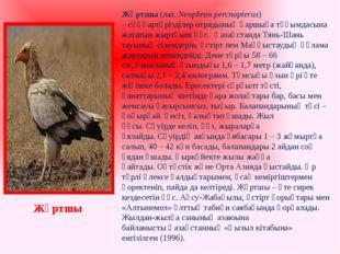 Жұртшы(лат.Neophron percnopterus) –сұңқартәрізділер отрядыныңқаршыға тұқы