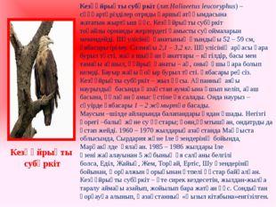 Кезқұйрықты субүркіт(лат.Haliaeetus leucoryphus) –сұңқартәрізділеротрядықа