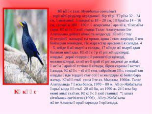 Көкқұс(лат.Myophonus caeruleus) –торғайтәрізділер отрядының бір түрі. Тұр