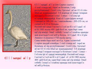 Сұңқылдақ аққу(лат.Cygnus cygnus) -Қазақстандакең тараған болатын, қазір ре
