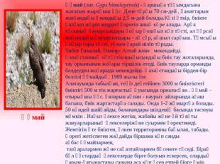 Құмай(лат.Gyps himalayensis) -қаршыға тұқымдасына жататынжыртқышқұс Дене