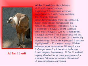 Ақбас құмай(лат.Gyps fulvus) – сұңқартәрізділер отряды, қырғилартұқымдасын