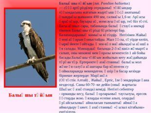 Балықшы тұйғын(лат. Pandion haliaetus) —сұңқартәрізділер отрядыныңтұйғында