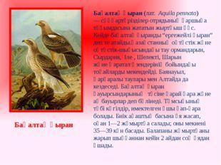 Бақалтақ қыран (лат. Aquila pennata) —сұңқартәрізділер отрядыныңқаршыға тұ
