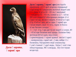 Дала қыраны, қыранқара Дала қыраны,қыранқара (лат.Аquila nipalensis) –сұңқа