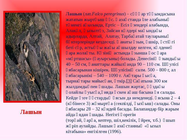 Лашын (лат.Falco peregrinus) – сұңқар тұқымдасына жататын жыртқыш құс. Қазақс...