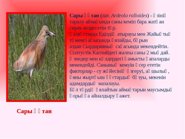 Сары құтан(лат.Ardeola ralloides) - өзінің таралу аймағында саны кеміп бара...