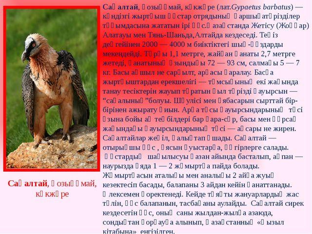 Сақалтай, қозықұмай, көкжөре (лат.Gypaetus barbatus) — күндізгіжыртқыш құста...