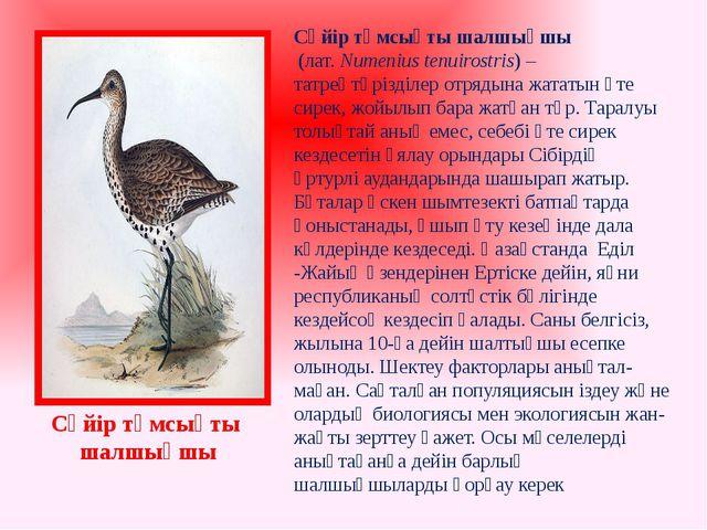 Сүйір тұмсықты шалшықшы (лат.Numenius tenuirostris) –татреңтәрізділер отряд...