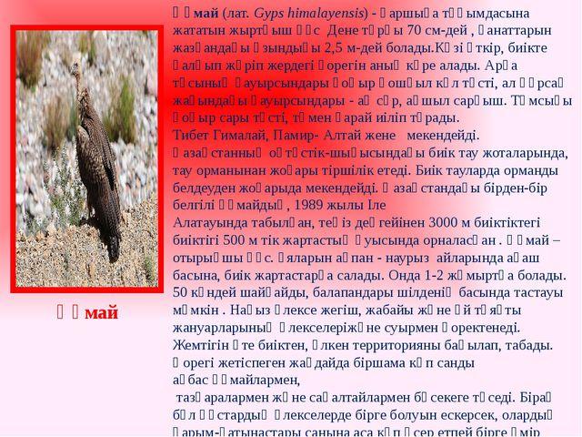 Құмай(лат.Gyps himalayensis) -қаршыға тұқымдасына жататынжыртқышқұс Дене...