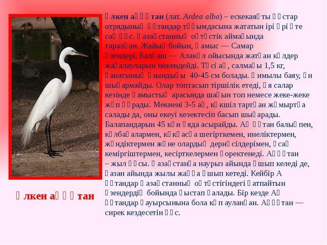 Үлкен аққұтан(лат.Ardea alba) –ескекаяқты құстар отрядының құтандар тұқымд...