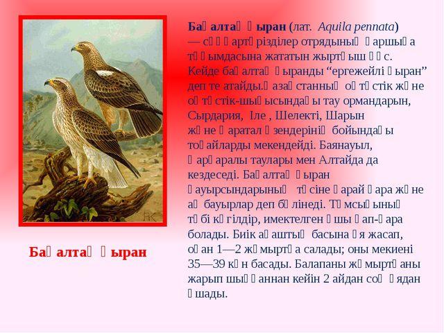 Бақалтақ қыран (лат. Aquila pennata) —сұңқартәрізділер отрядыныңқаршыға тұ...