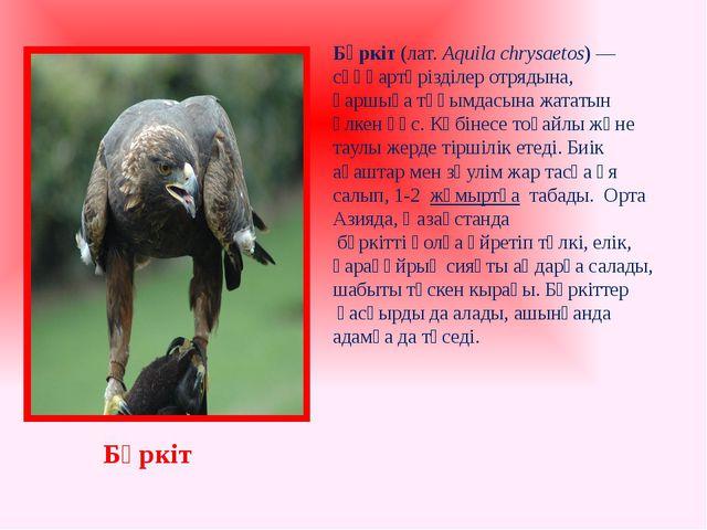 Бүркіт(лат.Aquila chrysaetos) —сұңқартәрізділеротрядына, қаршығатұқымдасы...
