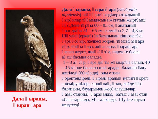Дала қыраны, қыранқара Дала қыраны,қыранқара (лат.Аquila nipalensis) –сұңқа...