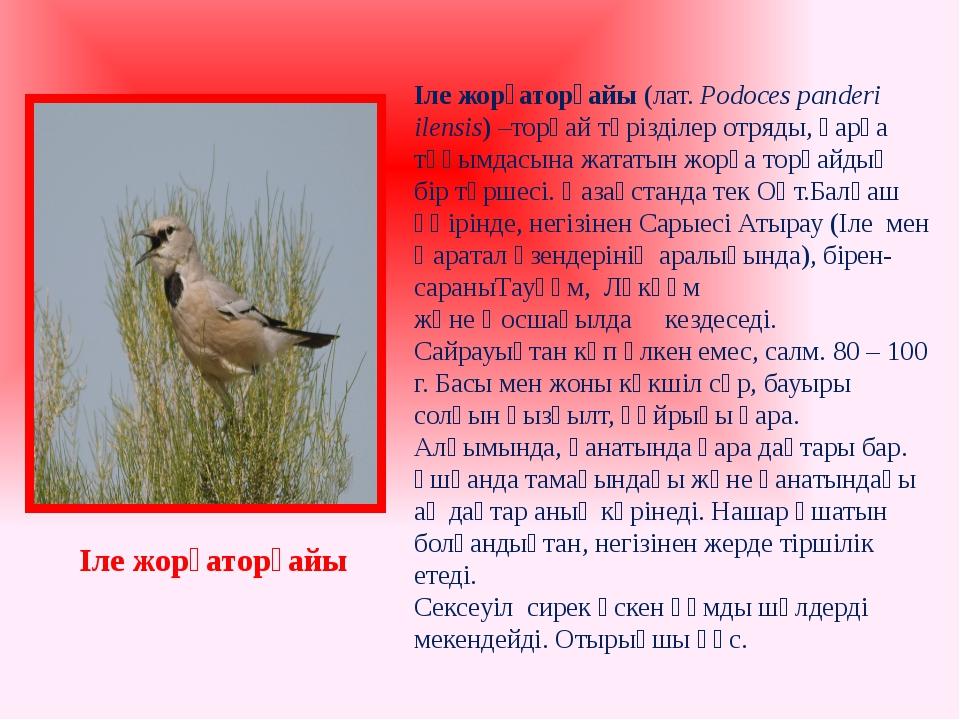 Іле жорғаторғайы(лат. Podoces panderi ilensis) –торғай тәрізділер отряды, қа...
