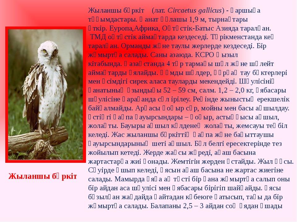 Жыланшы бүркіт (лат.Circaetus gallicus) -қаршыға тұқымдастары. Қанат құлашы...