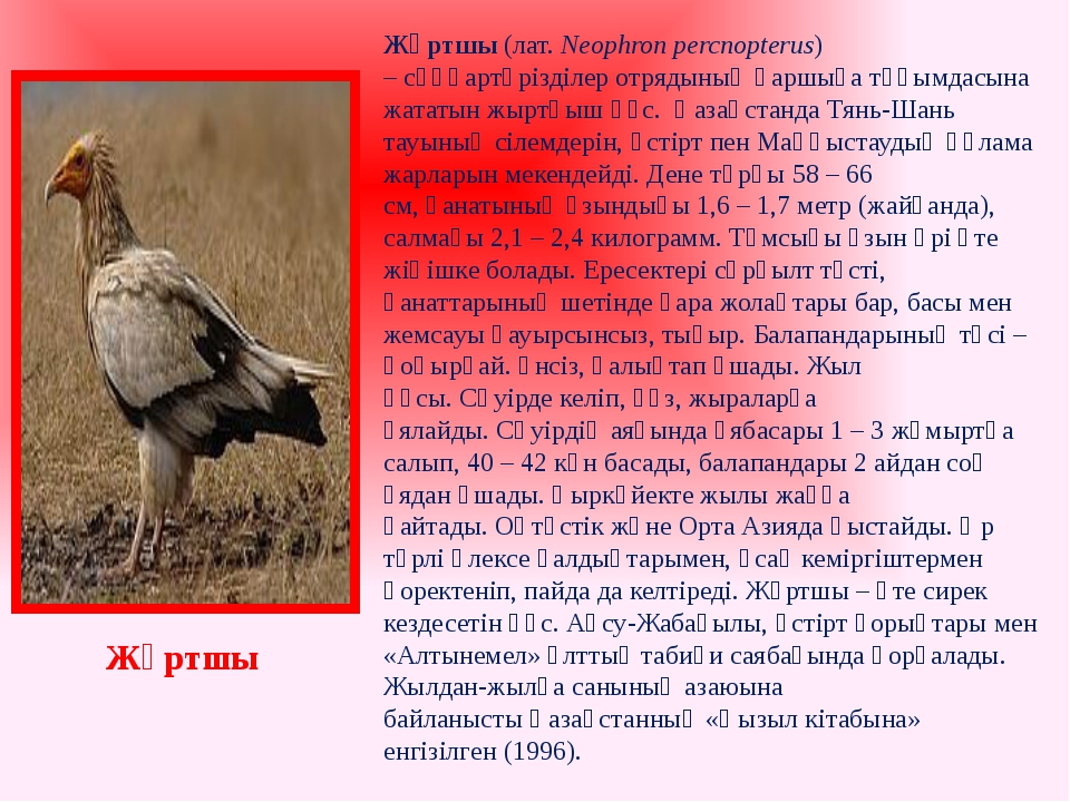 Жұртшы(лат.Neophron percnopterus) –сұңқартәрізділер отрядыныңқаршыға тұқы...