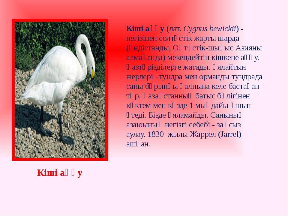 Кіші аққу(лат.Cygnus bewickii) - негізінен солтүстік жарты шарда (Үндістанд...