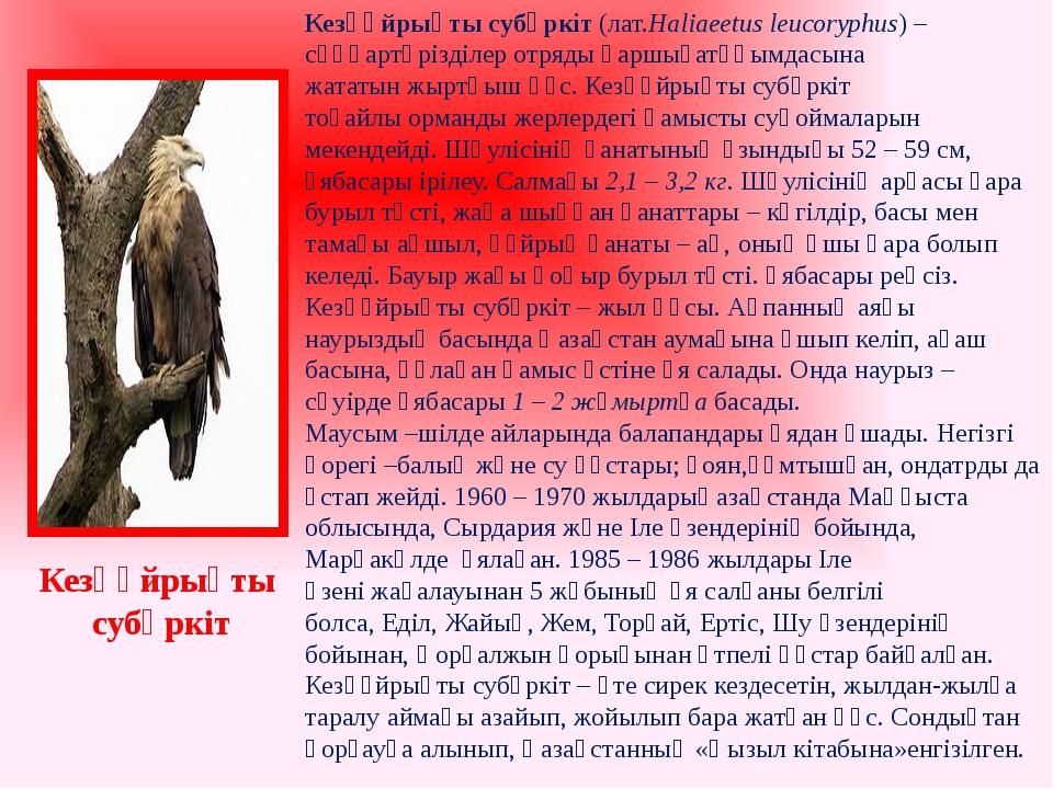 Кезқұйрықты субүркіт(лат.Haliaeetus leucoryphus) –сұңқартәрізділеротрядықа...